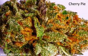 Cherry Pie Marijuana Strain